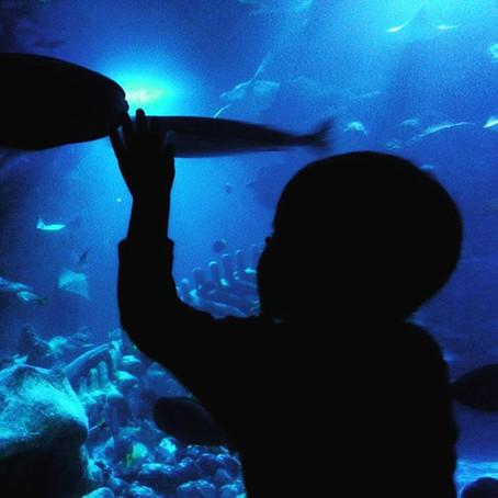 London Sea Life Centre review