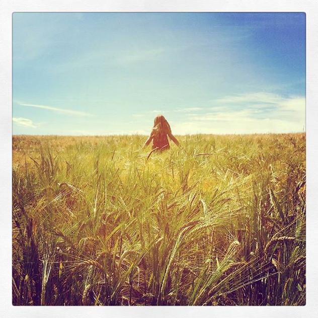 Instagram - Fields of gold! #barley #field