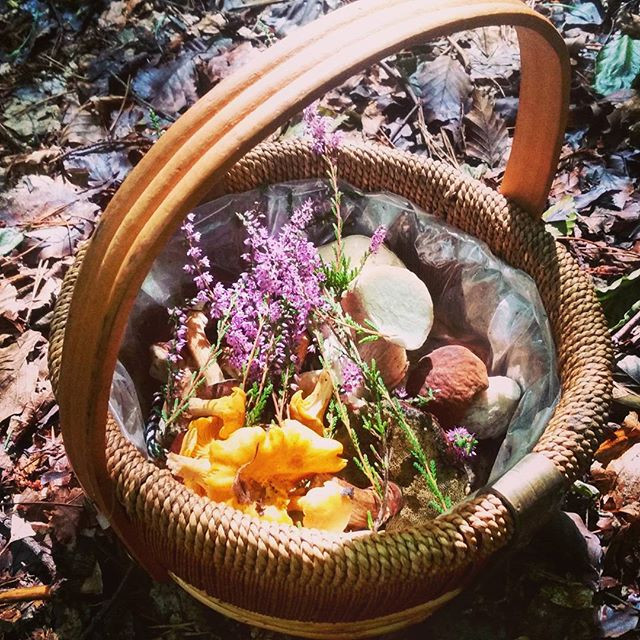 basket of foraged mushrooms and heather