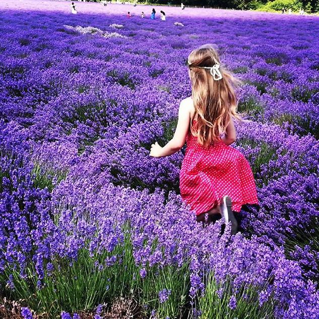 Instagram - Running in the #lavender