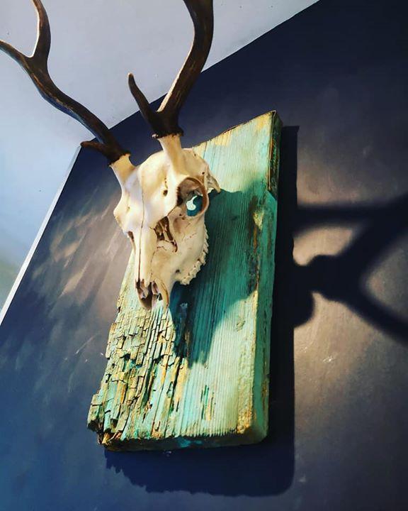 How to mount a deer skull