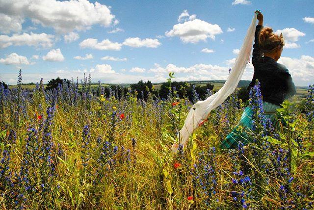 wild flower meadow in Kent