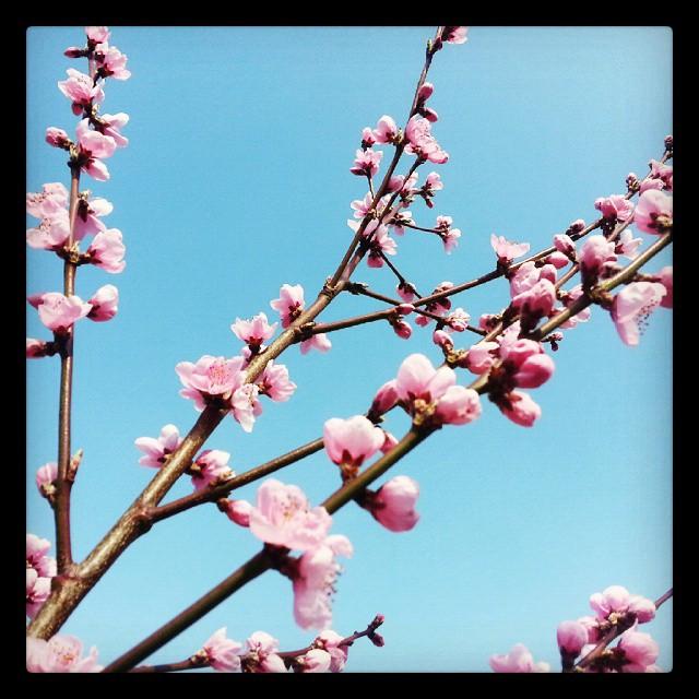 Instagram - #blossom