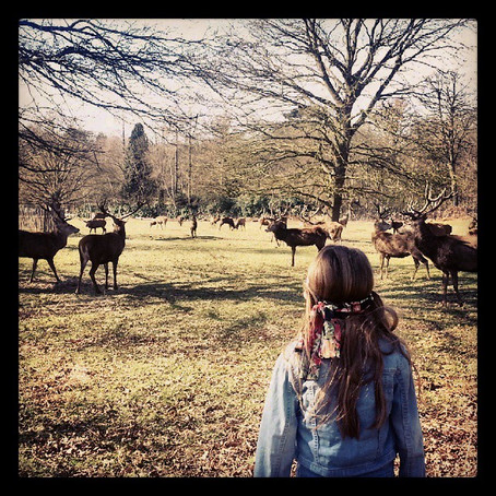Day out: Richmond Deer Park