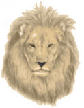 Pride Lion Gold 001.jpg