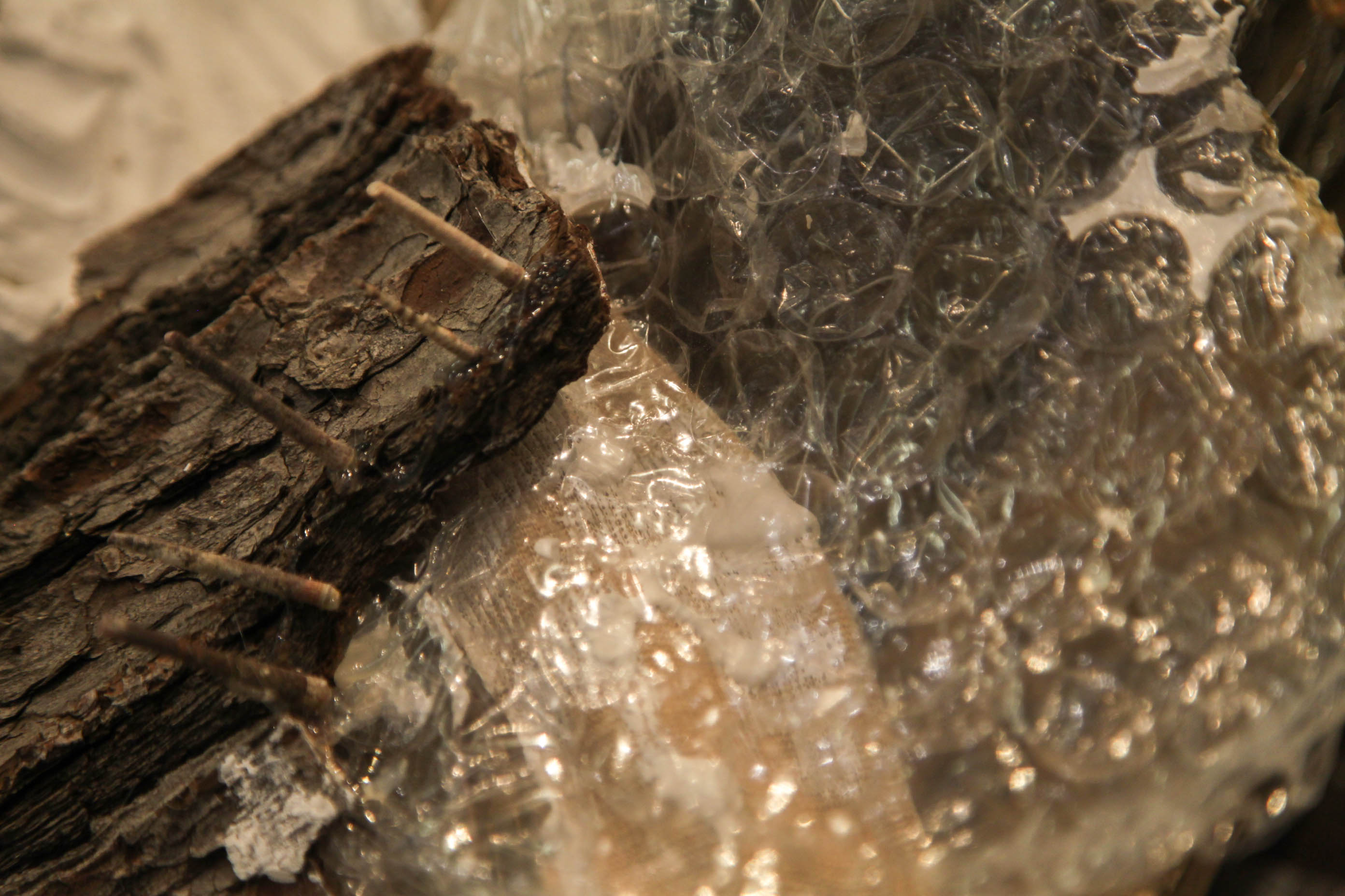 Sea urchin Spine detail