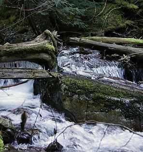 Trestle Creek.jpg