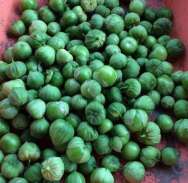 tomatillo-harvest.jpg