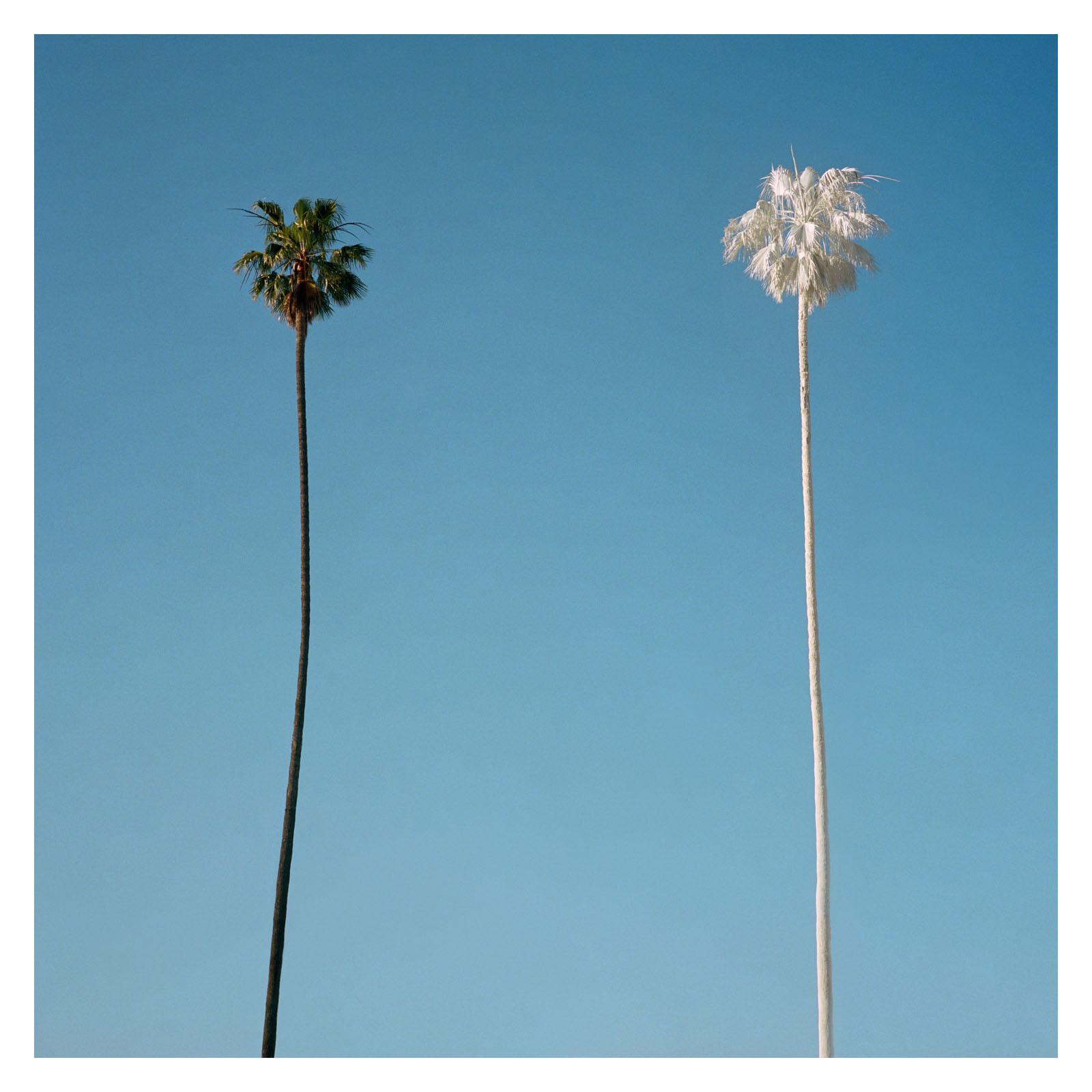 White Palm, 2015