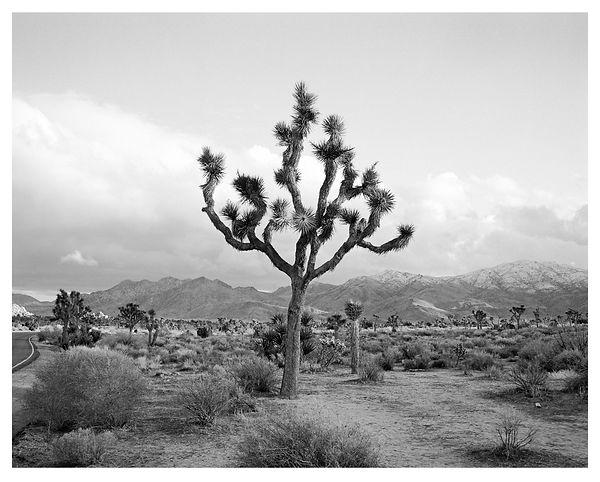 24 Joshua Tree.jpg