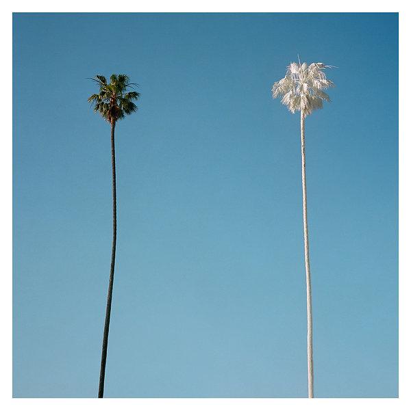 09 White Palm 2015.jpg