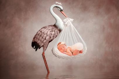 a stork holding up a baby girl, best newborn photographer hampshire aldershot