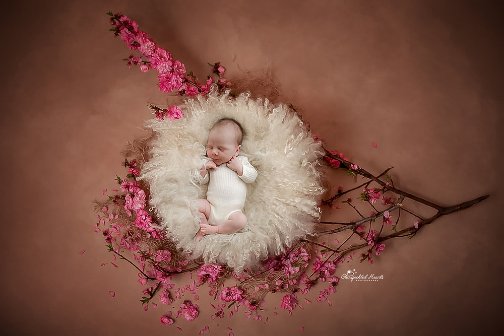 newborn curled up in a large white fluffy basket lying in a large branch with pink flowers on a brown background for her newborn photography session in aldershot hampshire