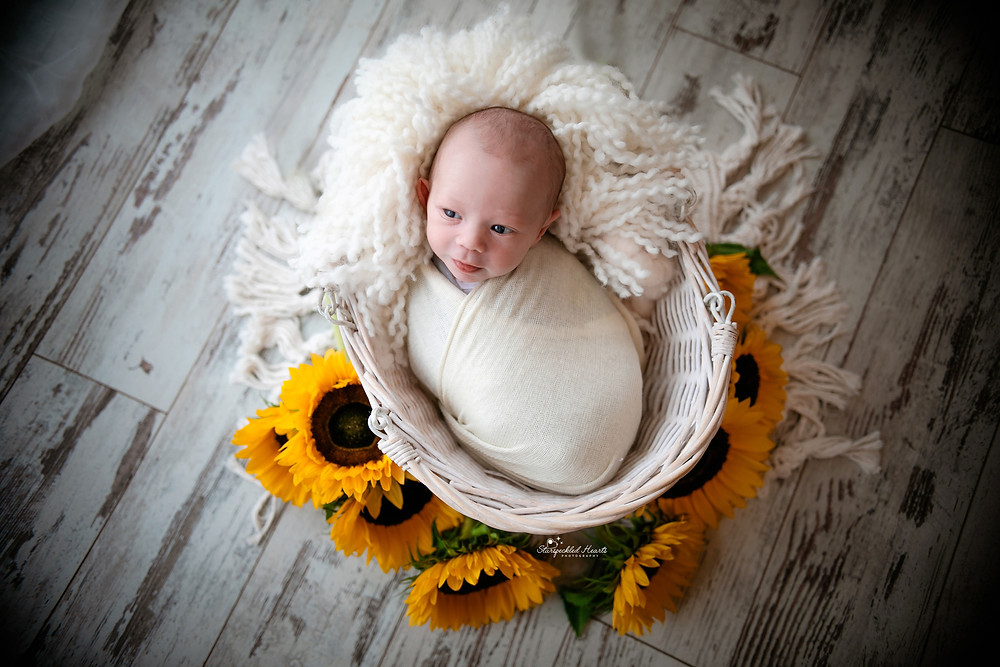 adorable newborn baby girl wrapped up in a wicker basket surrounded by sunflowers