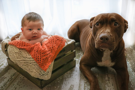 newborn resting his head on arms lying in crate next to large dog