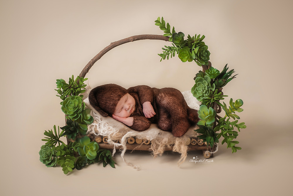 newborn photography session of baby boy lying on a wooden bed surrounded by succulents