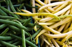 Green Bean versus Wax Bean
