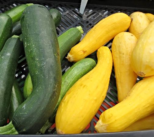Zucchini vs. Squash