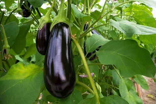 Italian Eggplant - AVAILABLE STARTING 4/20