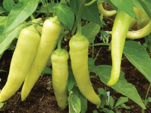 Banana Pepper - AVAILABLE STARTING 4/20