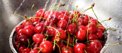 Selecting and Storing Cherries