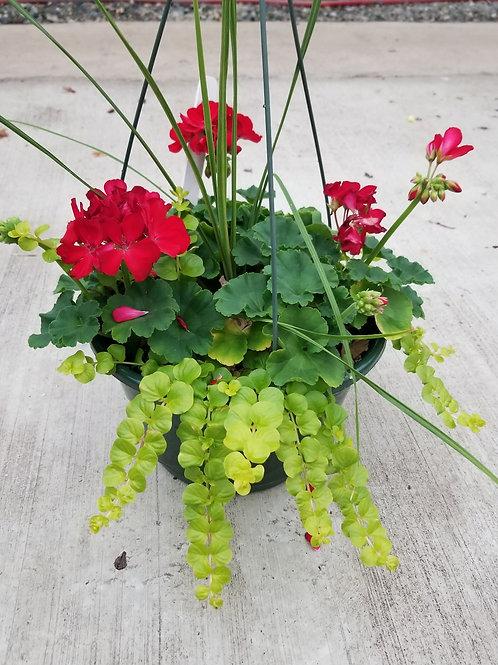 Red Geranium Basket