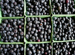 Blueberry Selection