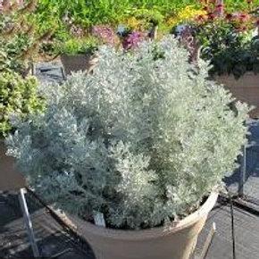 Artemisia - Parfum D'Ethiopia