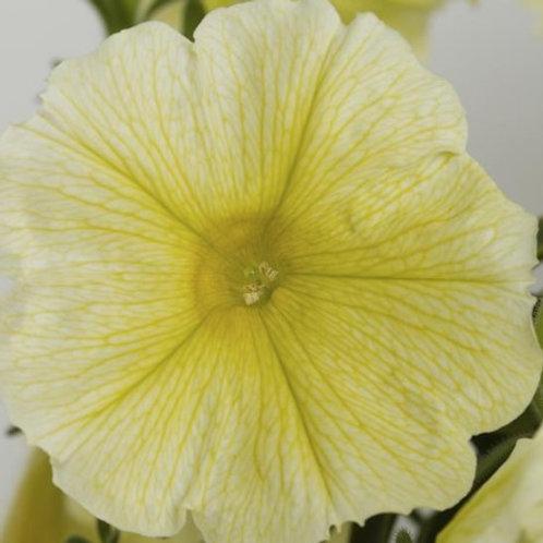 Petunia - Sanguna Yellow