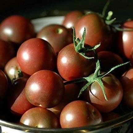Cherry Tomato - Chocolate Cherry - AVAILABLE STARTING 4/20