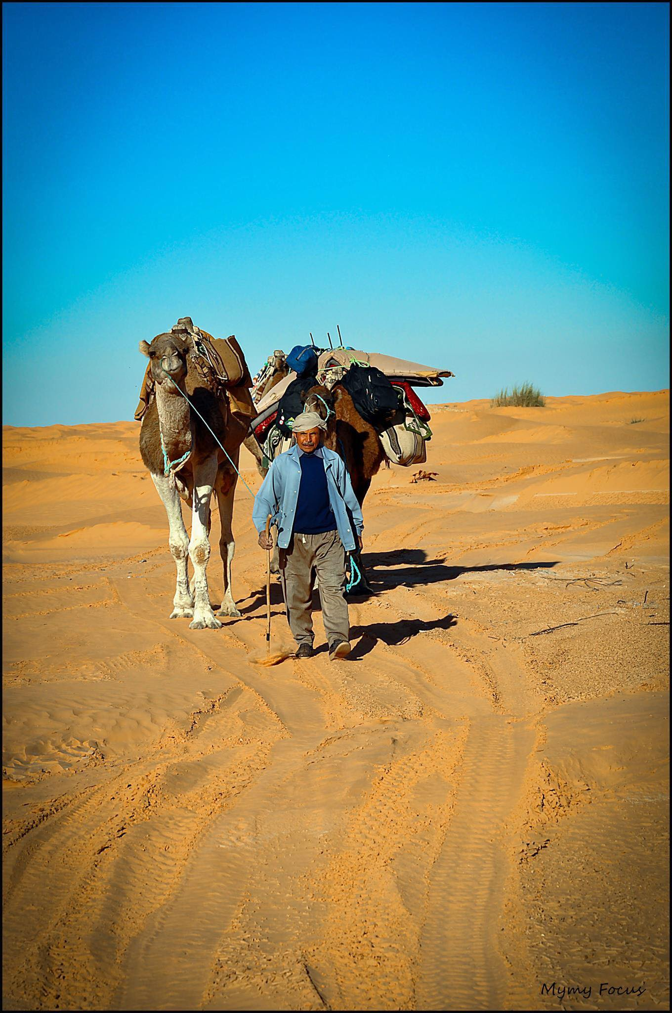 Le chamelier du désert Tunisien.jpg