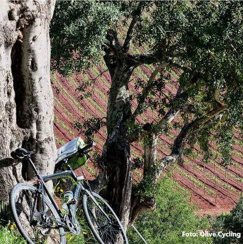 alantejo-tour-bike-3png