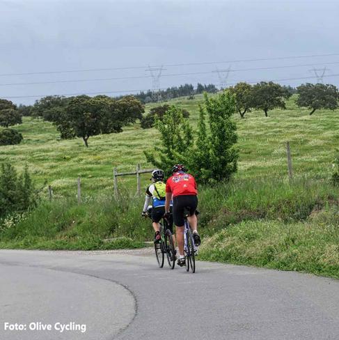 algarve-bike-tour-olive-cycling-2png