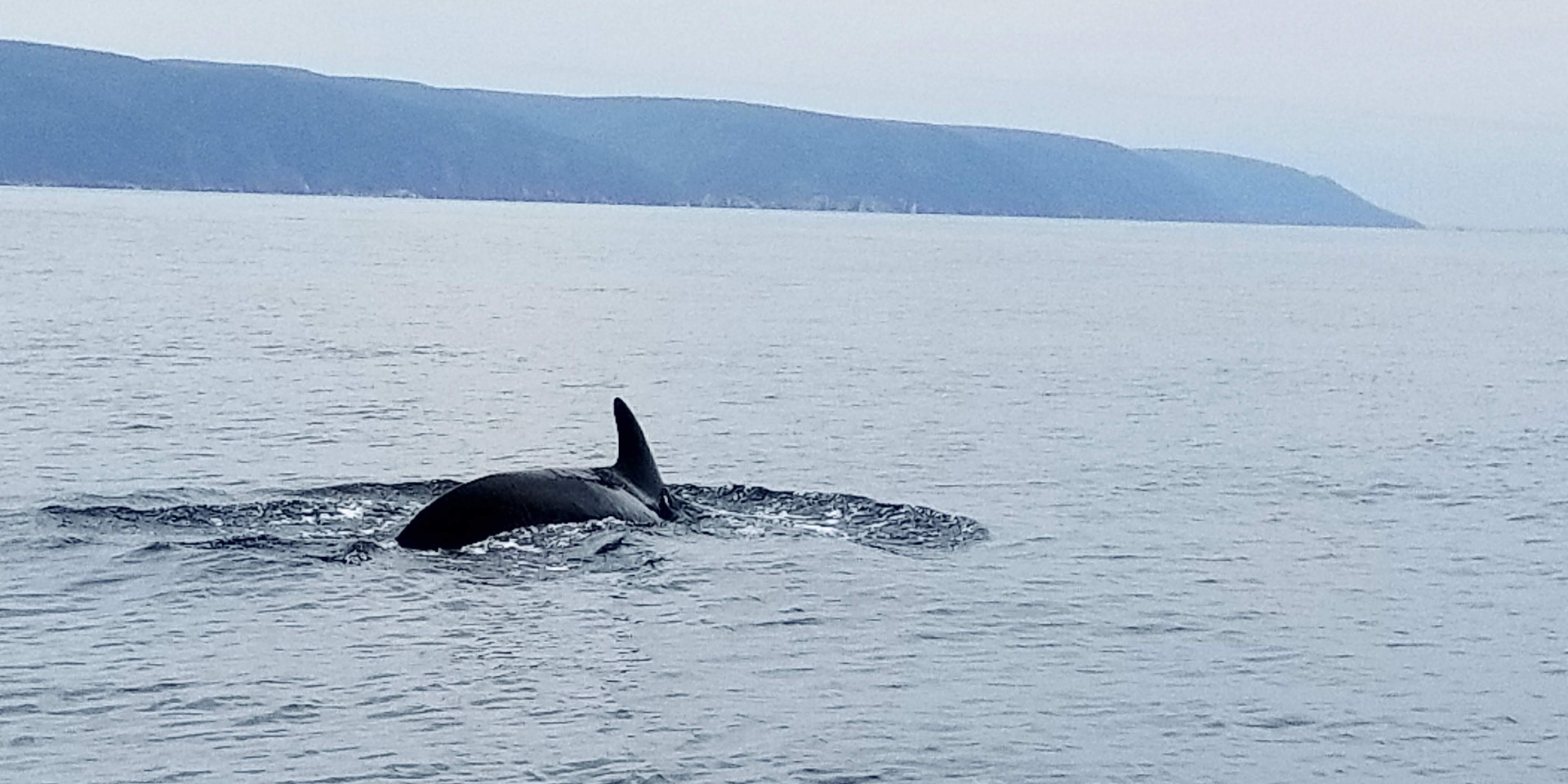 Whale watching in Cape Breton