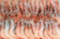 gamba blanca_edited.jpg