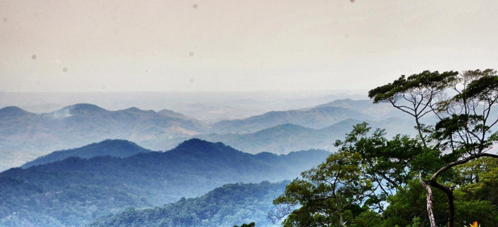 tendrás la oprtunidad de adentrarte en el corazón de la selva de Pluma Hidalgo.