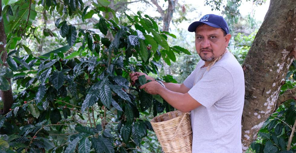 Aprende todo el ciclo del café de la planta a la taza.