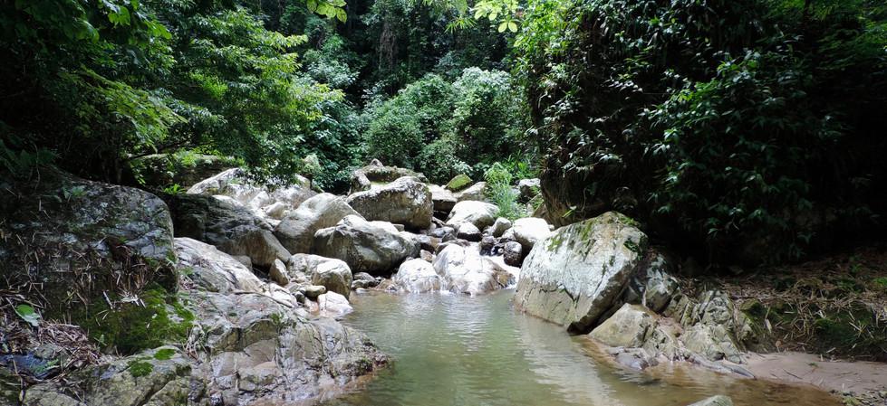 los sonidos de la selva,