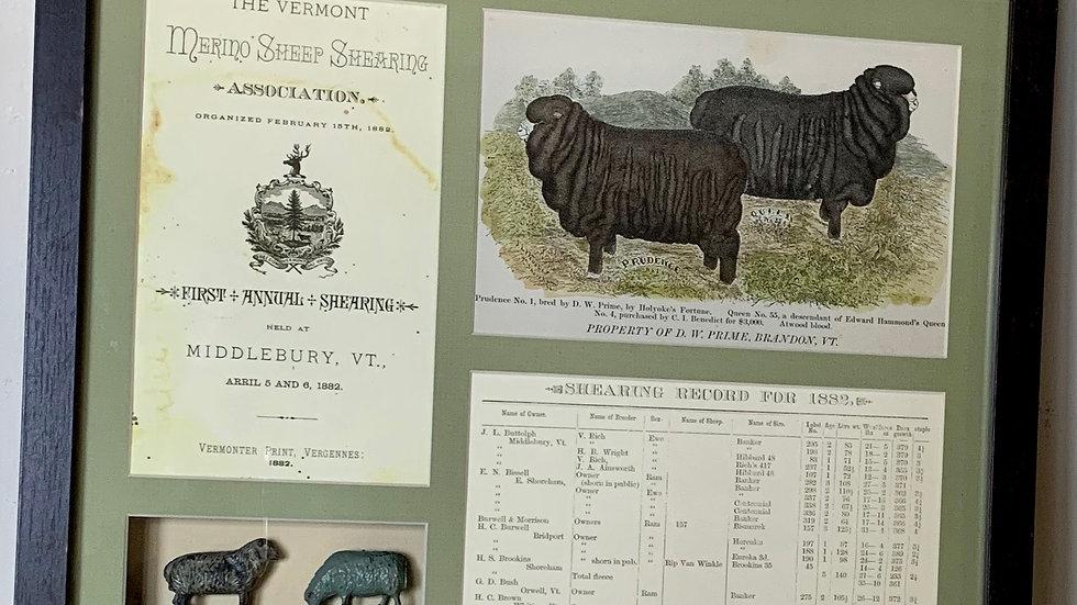 Vermont Merino Sheep.