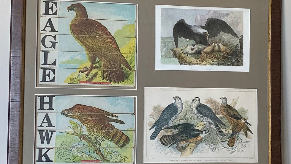 Eagle and Hawk.