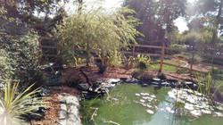 bassin naturel (après)