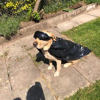 Max the Shadow Dog