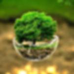 KNC Green tree.jpg