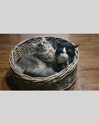 Sourdough Cat Bed - Grey