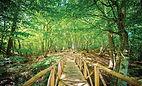 The Wild Meadow Kent
