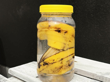 How to make plant fertiliser with banana peels