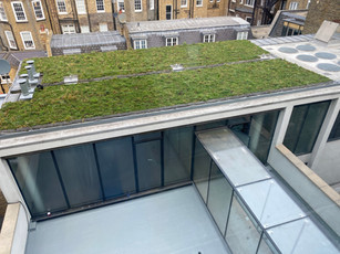 Green roof installed at Bentinck St
