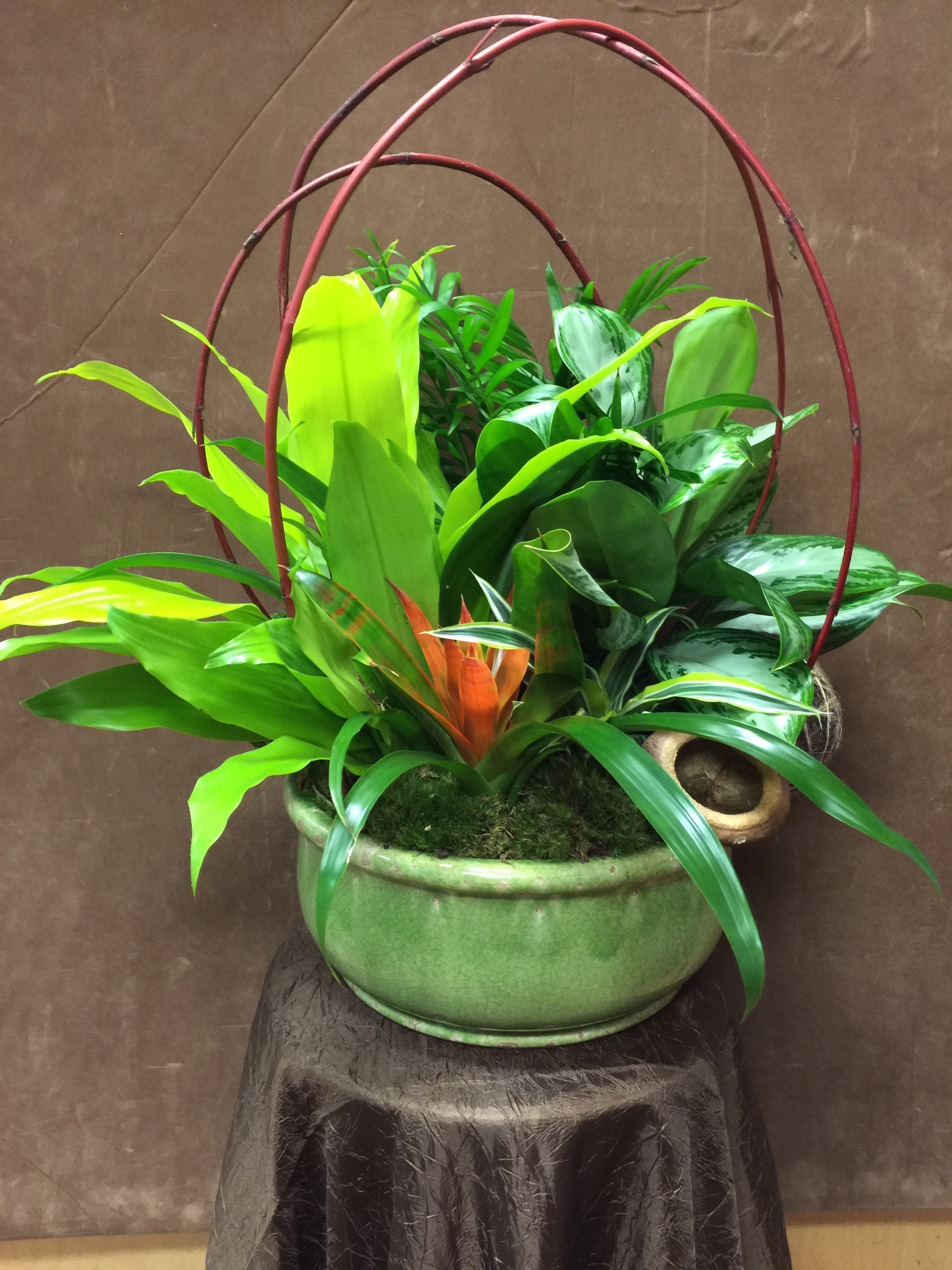 Bromeliad with planter