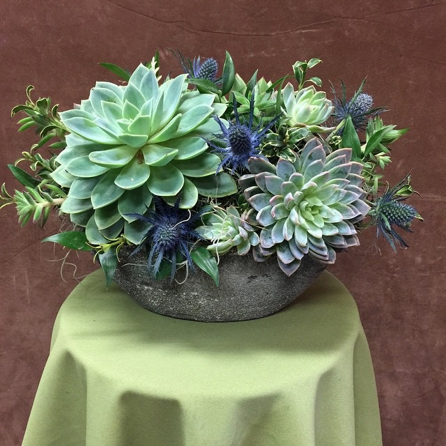 Succulent planter ceramic 2