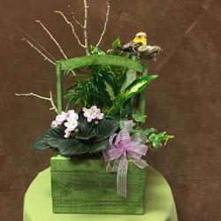 organic orchid planter box